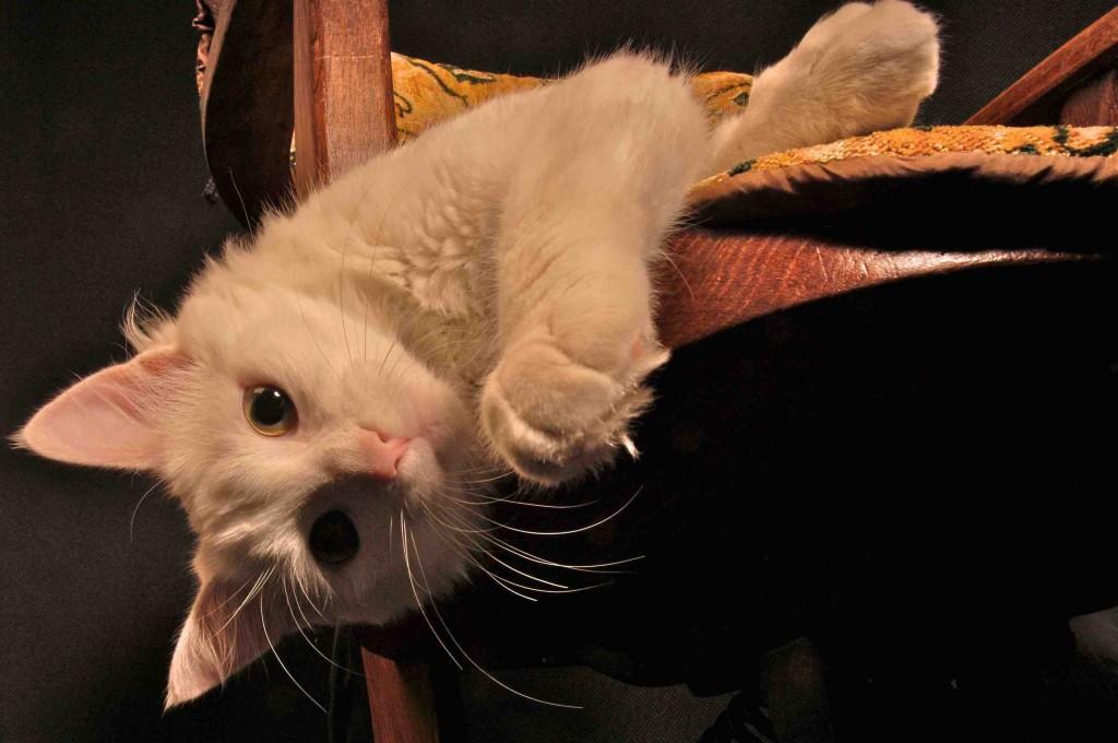 Les Chats en voyage : Tiga, notre chat
