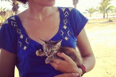 Rencontre avec les chats durant notre road trip